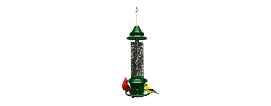 squirrel buster plus squirrel-proof bird feeder