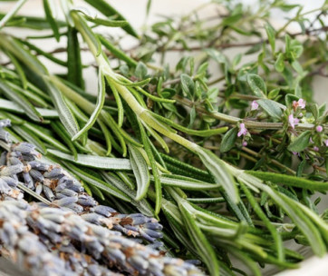 the easiest herbs to grow for the perfect culinary garden