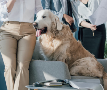want to increase productivity? take your dog to work